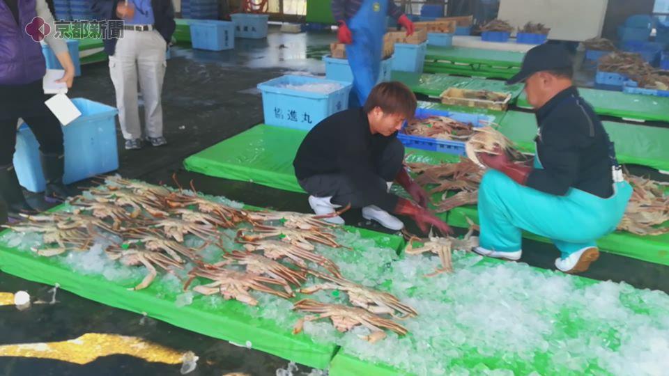 日本海の冬の味覚・ズワイガニ漁の解禁(2019年11月6日 京都府内)