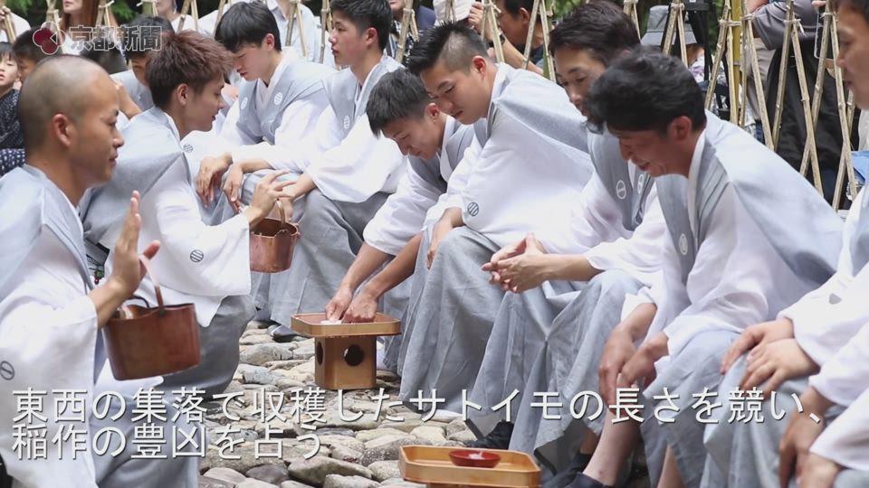 サトイモの長さ競う「近江中山の芋競べ祭り」(2019年9月1日)