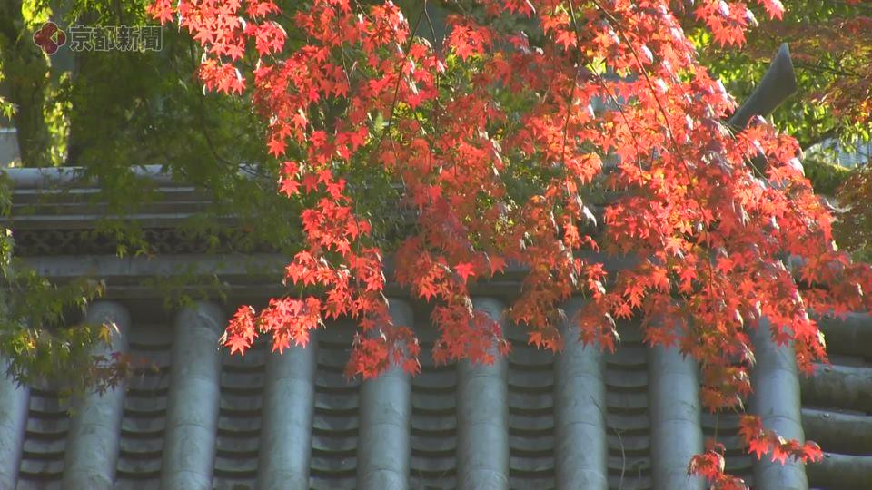 興聖寺(2019年11月15日 京都府宇治市)