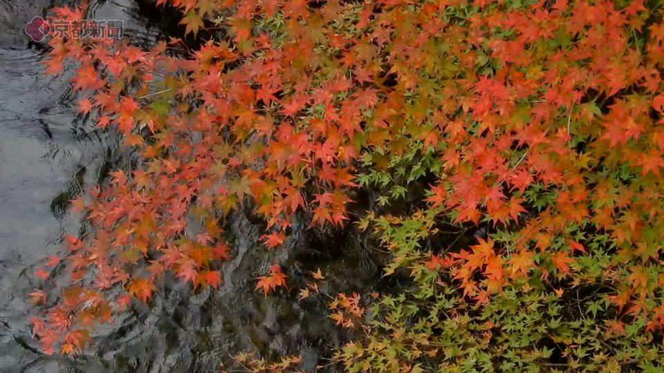 清滝(2019年11月10日 京都市右京区)