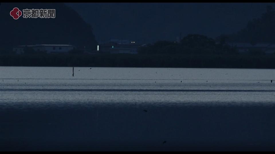 ツバメの「ねぐら入り」(近江八幡市・西の湖 2019年9月)