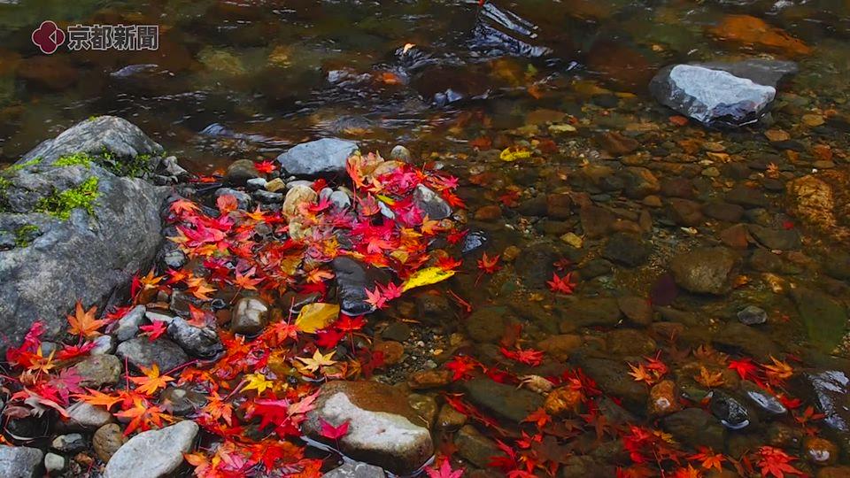 〈秋のしらべ〉清滝川(京都市右京区)