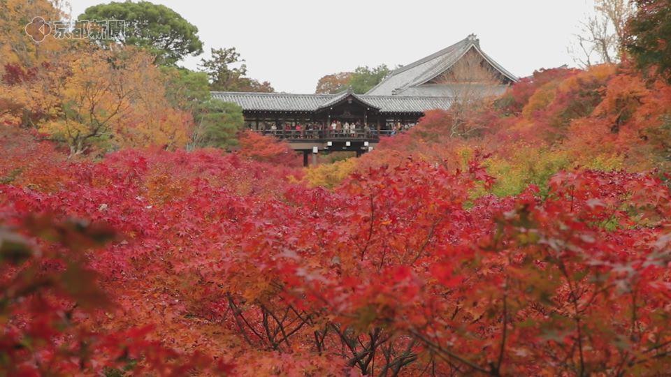 東福寺の紅葉(2019年11月22日、京都市東山区)