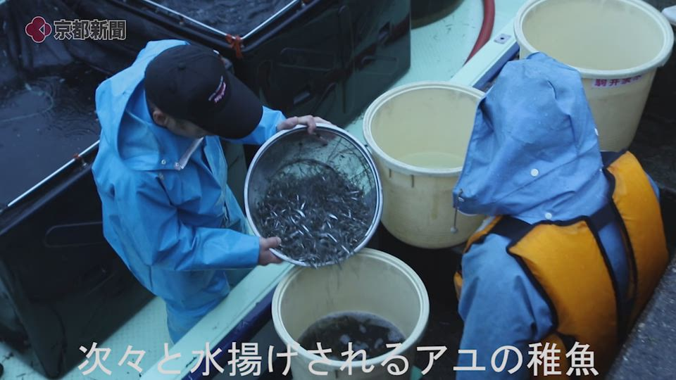 琵琶湖でアユ漁解禁(2019年12月2日、大津市・堅田漁港)