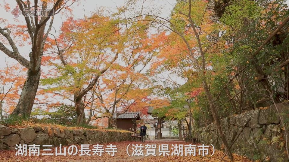 長寿寺参道を彩るイチョウ(2019年11月28日 滋賀県湖南市)