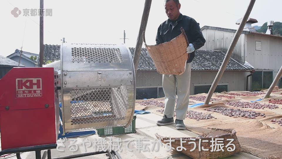 「古老柿」作り最盛期(2019年12月11日、京都府宇治田原町)