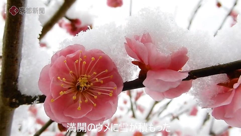 京都市内北部でうっすら雪化粧(2020年2月18日 京都市内)