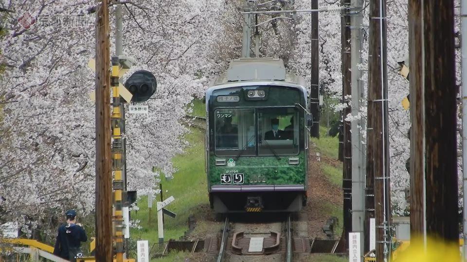 嵐電・桜のトンネル(2020年3月28日 京都市右京区)