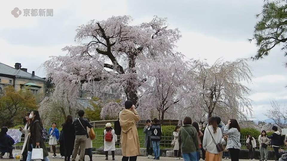 円山公園(2020年3月29日 京都市東山区)