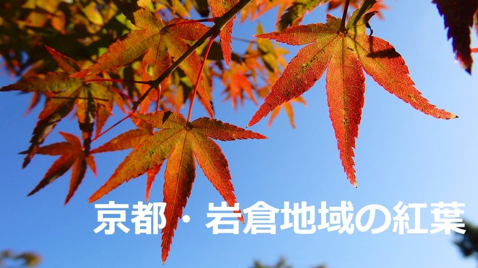 京都・岩倉地域の紅葉(2020年10月25日 京都市左京区)