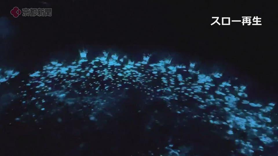 伊根湾の夜光虫(2021年5月 京都府伊根町)
